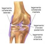 legamenti del ginocchio.jpg